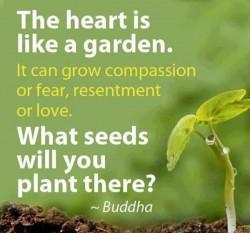 planting seeds ~ Buddha