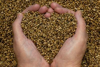 hemp-heart-seeds-hands